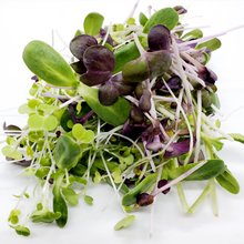 Load image into Gallery viewer, Organic Micro Mix Microgreens