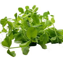 Load image into Gallery viewer, Organic Pea Shoots Microgreen Mix