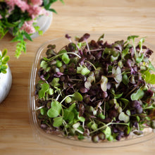 Load image into Gallery viewer, Organic Radish Microgreen Mix