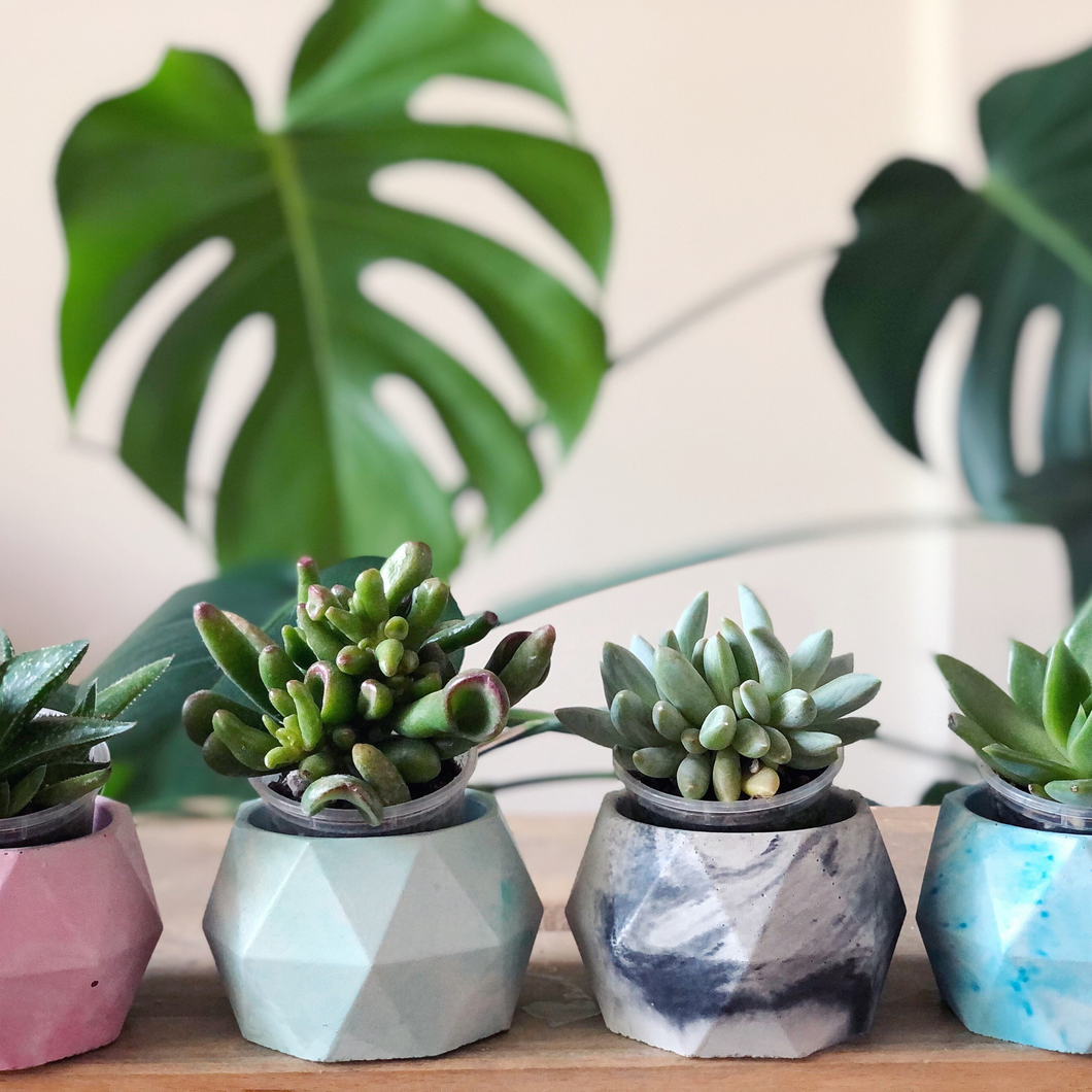 Small Gem Planter + Succulent