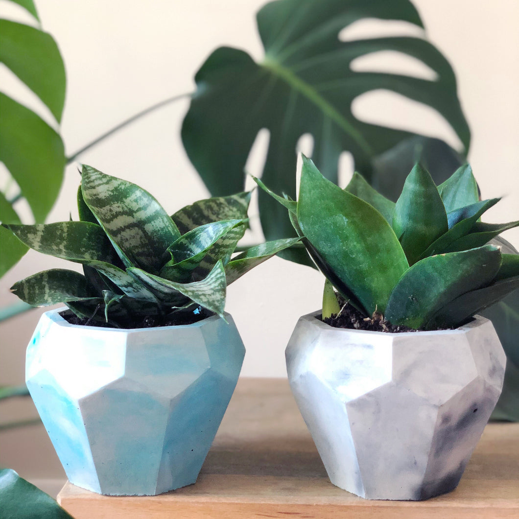 Large Gem Planter + Succulent