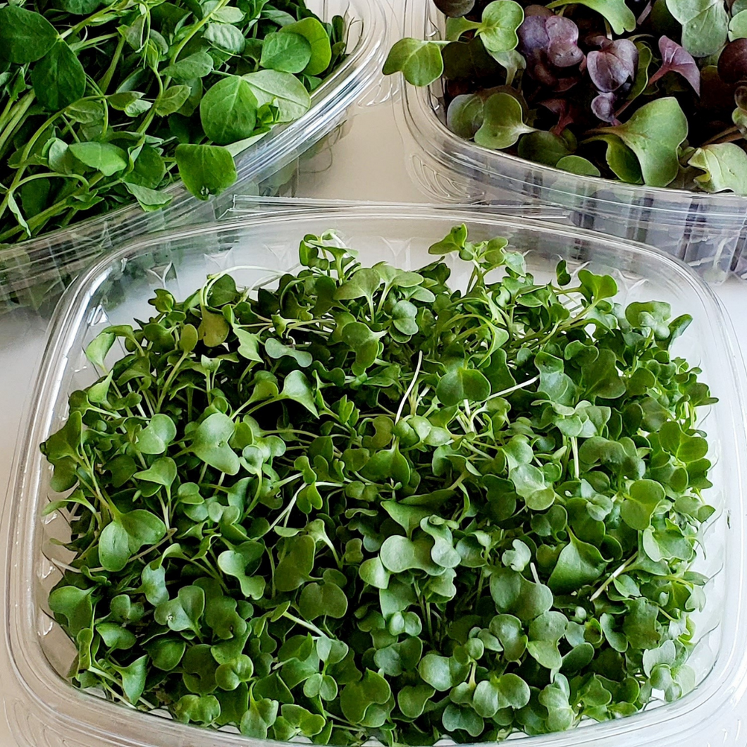 Organic Broccoli Microgreen Mix