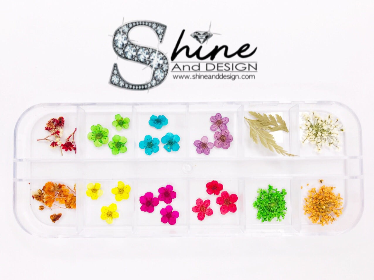 "SHINE- Organic Blossom ""Wild Daisy Mix"" Collection/ 12 Pcs - Pressed Flowers"