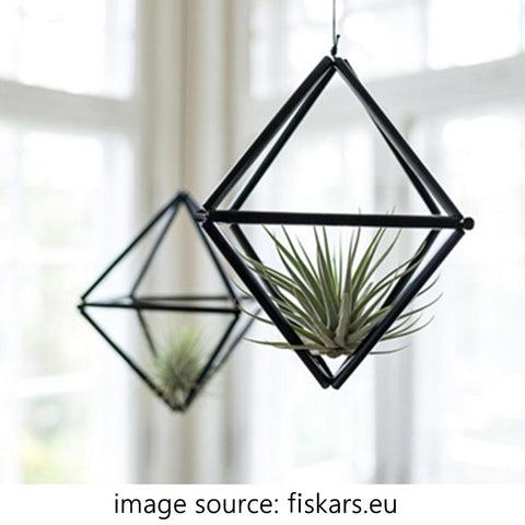 airplant-in-metal-hanging-planter-by-the-window