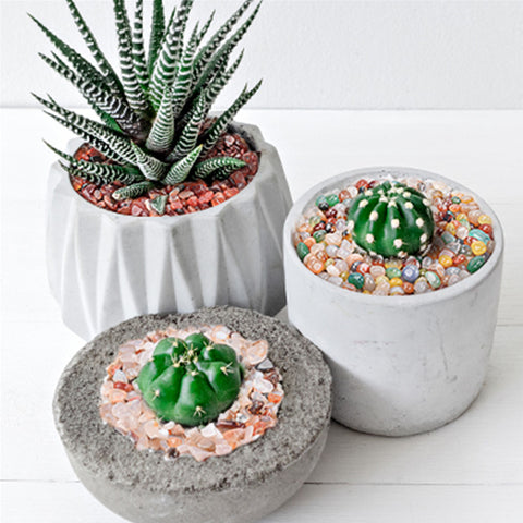one-potted-haworthia-and-two-potted-cactus-in-separate-clay-pots-with-colorful-pebbles-as-top-dressings