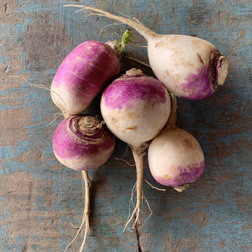 Summer Turnips