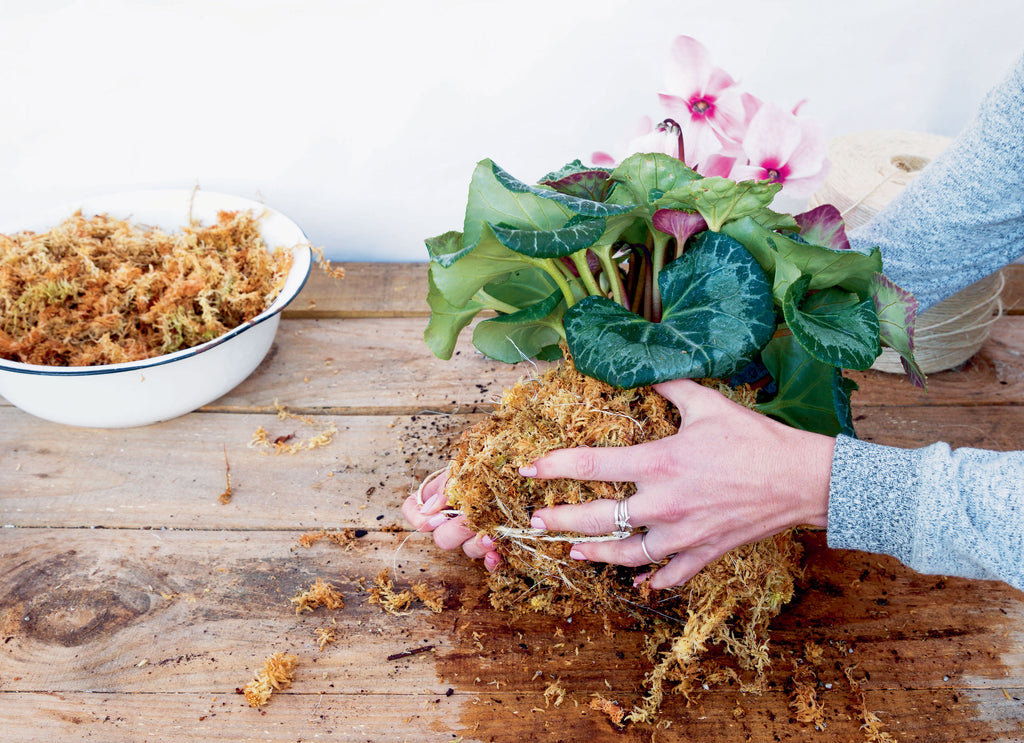 Holding together the kokedama from the base