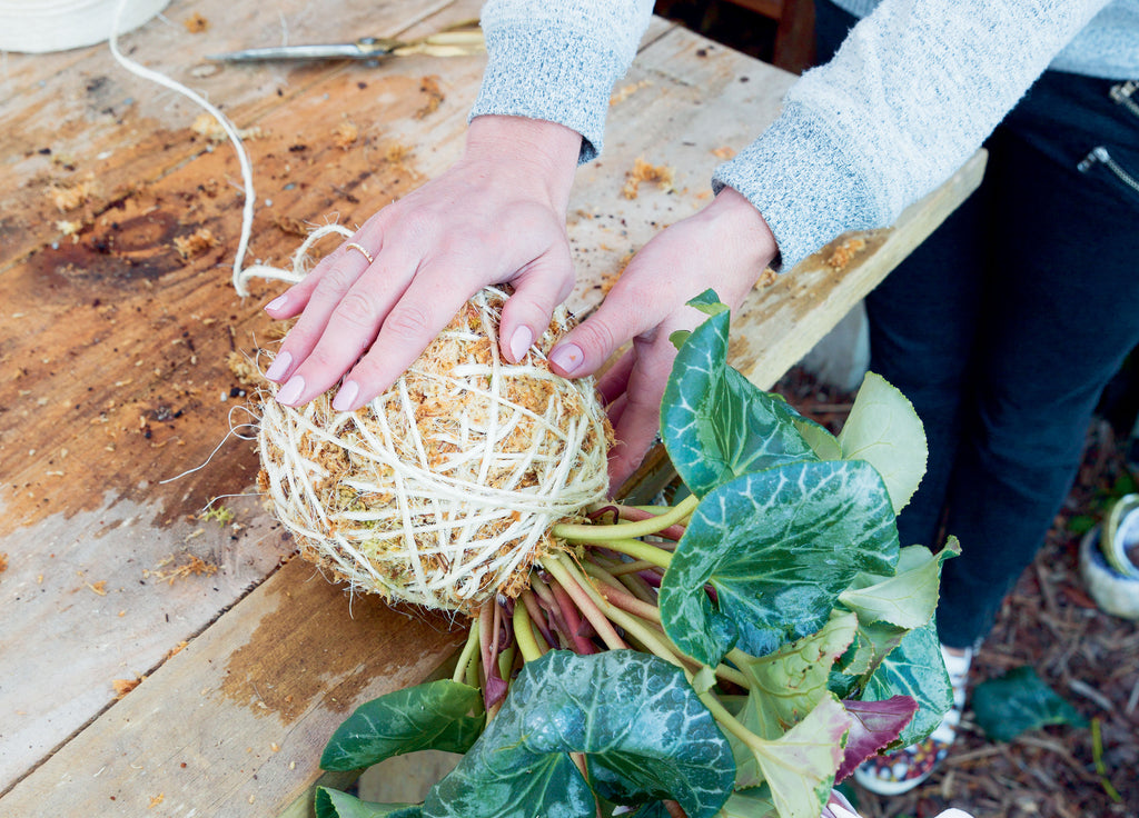 Pressing down on the base of the kokedama to make it into a round shape