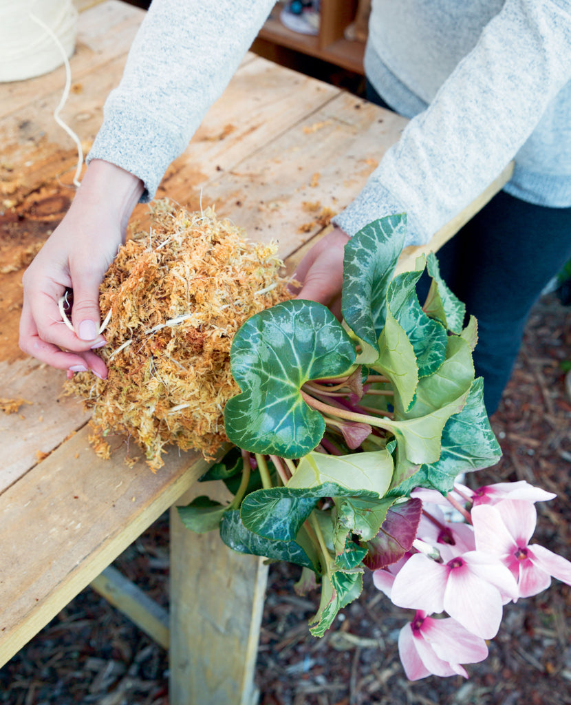 Wrapping the string around the base of the kokedama at the edge of the table