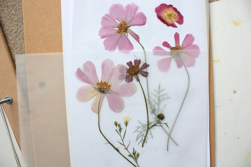 Pressed pink flowers on paper