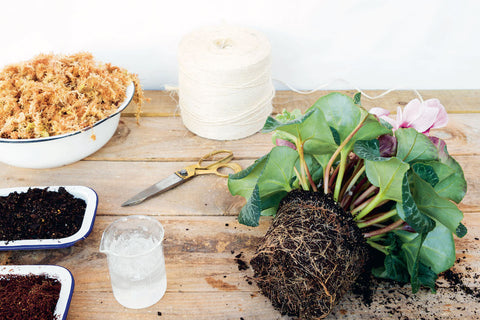 A cyclamen plant and other materials laid out on a table for making a kokeadama