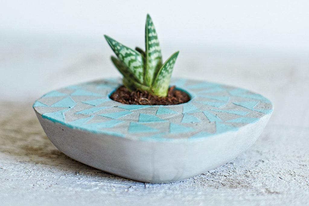 Small succulent in an asymmetrical concrete planter decorated with blue triangles