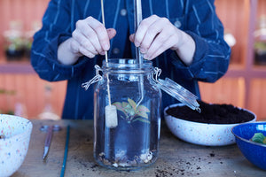 Make a household jar terrarium: Course + Kit