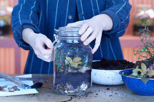 Make a household jar terrarium