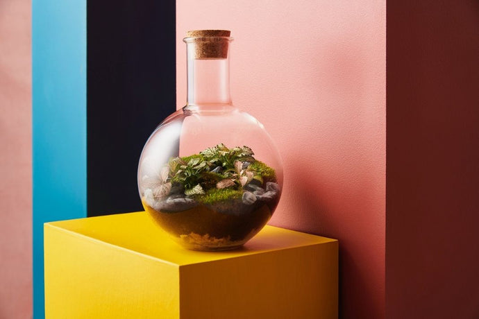 Make a boiling flask terrarium: Kit + Guide