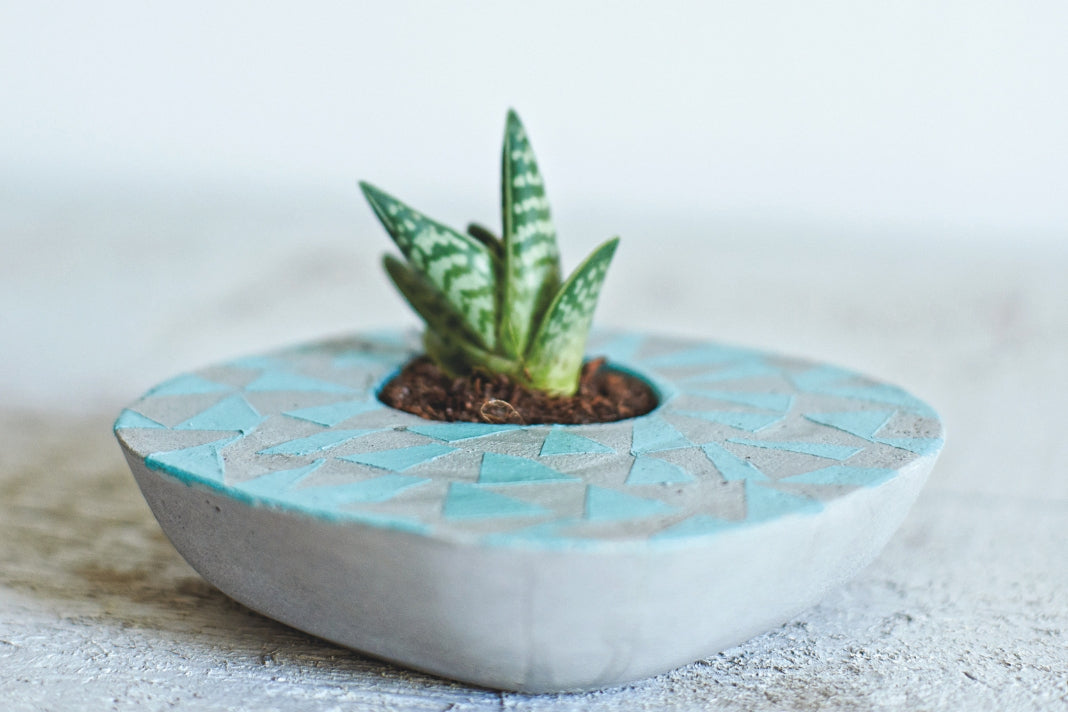 An asymmetrical concrete planter with blue triangle patterns and a small succulent.