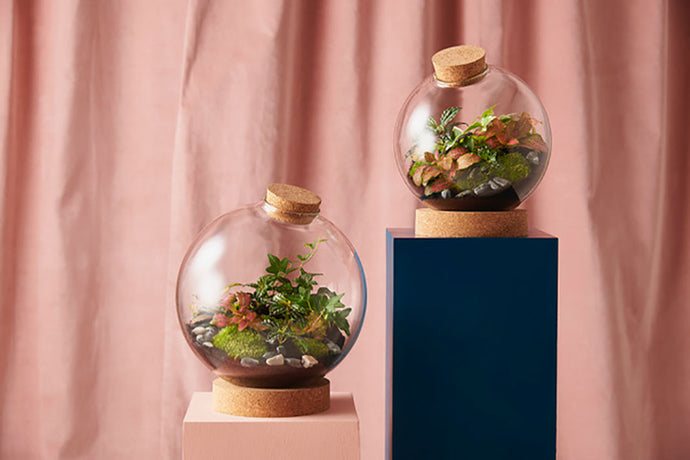 Make a globe terrarium: Kit + Guide