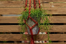 Load image into Gallery viewer, Make a spiral knot macramé plant hanger: Course + Kit