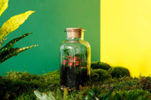 Load image into Gallery viewer, Make a tinyjohn terrarium: Course + Kit