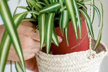 Load image into Gallery viewer, Hang indoor plants in baskets