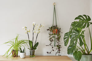Make a simple macramé knot plant hanger