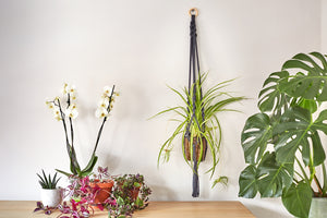 A macrame plant hanger placed next to white orchids and a fern.