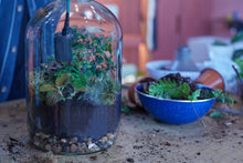 Load image into Gallery viewer, Make a demijohn terrarium