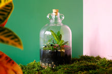 Load image into Gallery viewer, Make a demijohn terrarium: Online Course