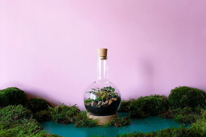 A completed flask terrarium against a lilac background with decorative moss scattered around.