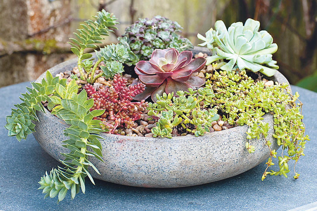 Make a succulent container garden