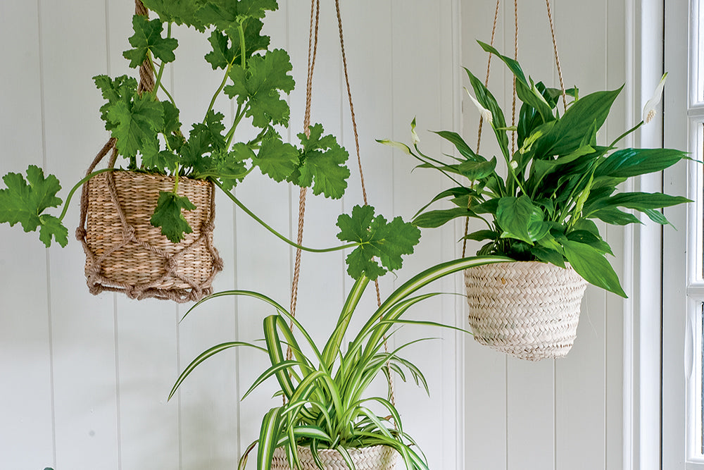 Hang indoor plants in baskets