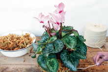 Load image into Gallery viewer, Make a cyclamen kokedama
