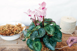 Make a cyclamen kokedama