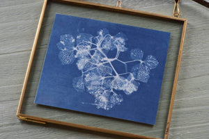 Learn how to make cyanotype prints: Course + Kit