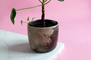 A smoke-fired ceramic pot with a money tree, against a pink background.