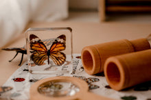 Load image into Gallery viewer, Butterfly Specimen