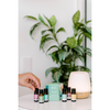 Bliss Diffuser & Diffuser Blends Collection