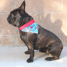 Load image into Gallery viewer, Fourth of July Dog Bandanas - Red White & Blue Stars & Fireworks