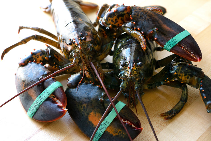 Live New England Lobsters, 2 Pack