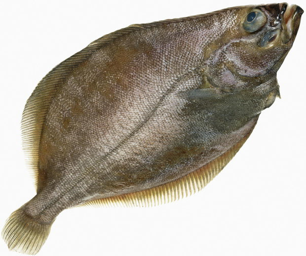 Fresh- Fluke Fillet (Summer Flounder)