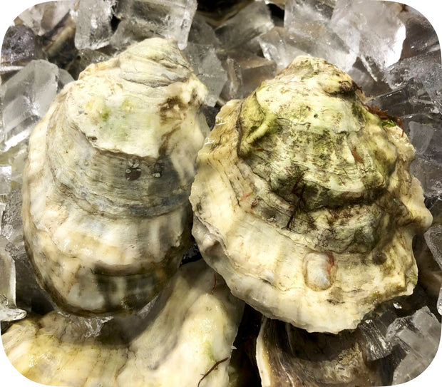 Fresh- Old Cove Oysters - Duxbury, MA 20ct