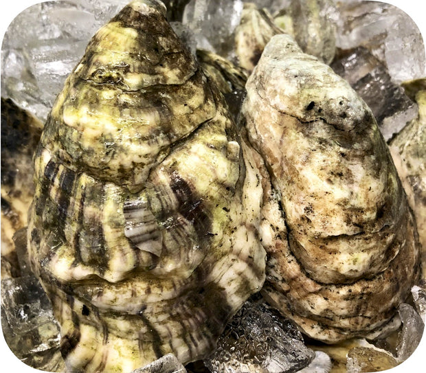 Fresh- Sandy Neck Oysters - Barnstable, MA 20ct