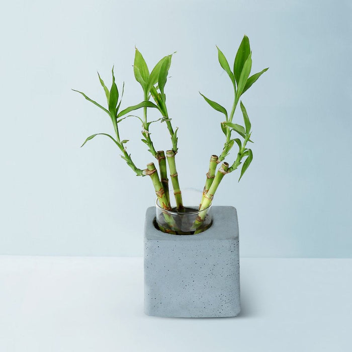 Greenin Table Planter