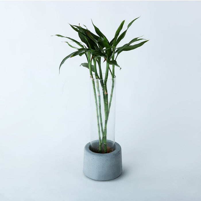 Concrete Greeno (B) Planter