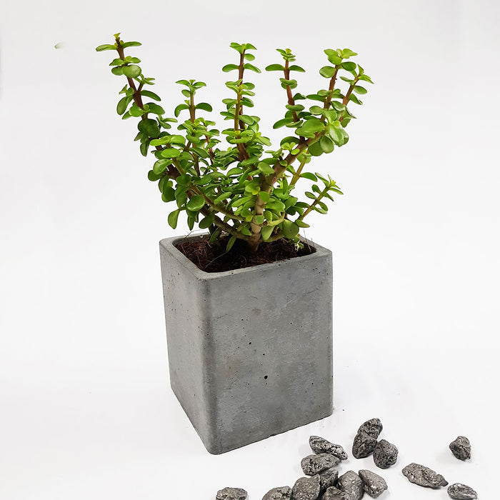 Concrete Table Planter 02