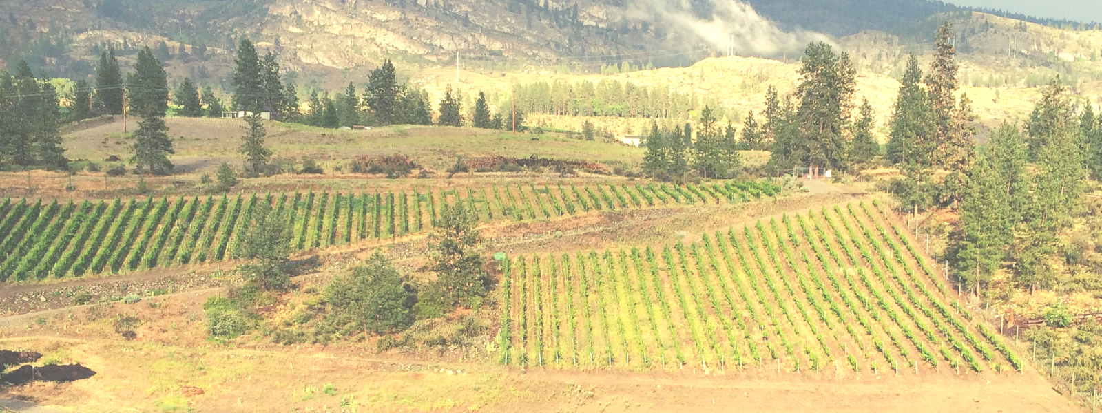 Hawk's Vineyard | BC Wine Studio