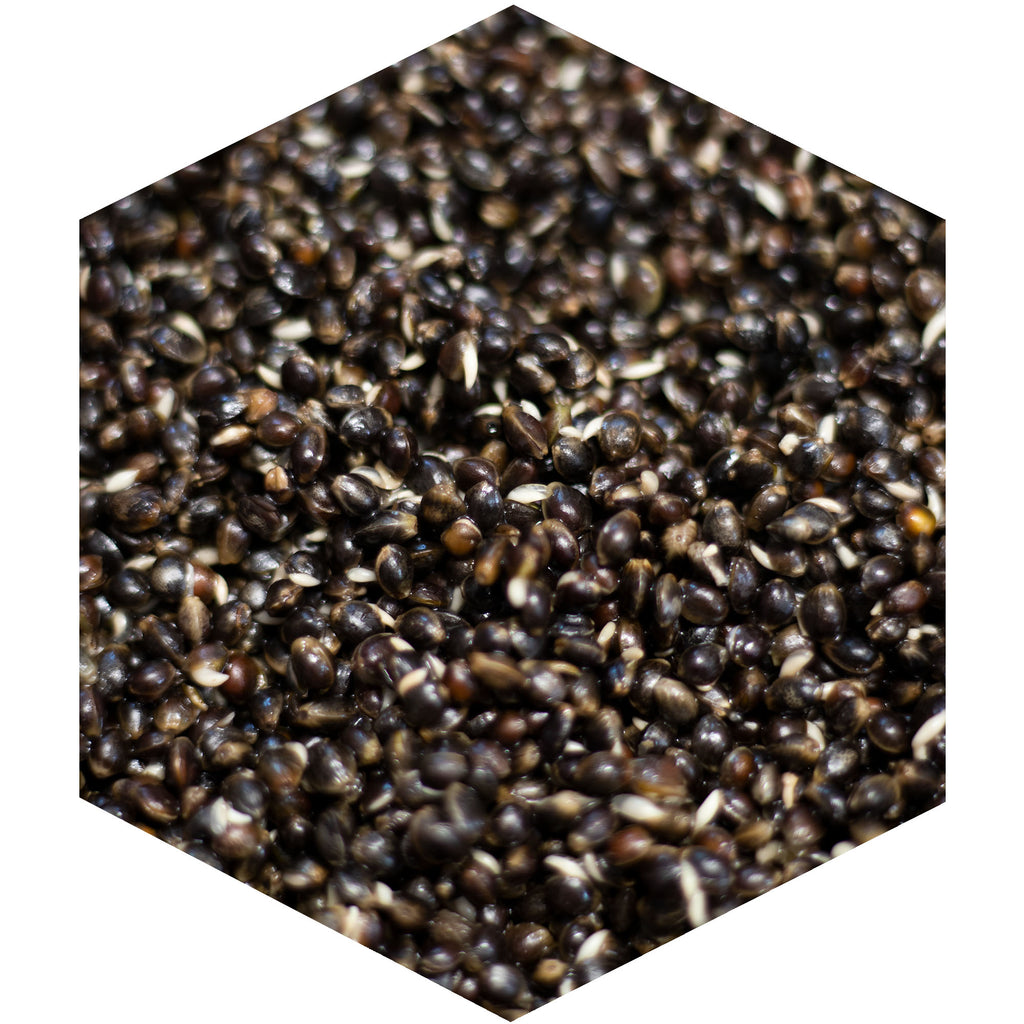 Hemp Seed | Fresh Particle