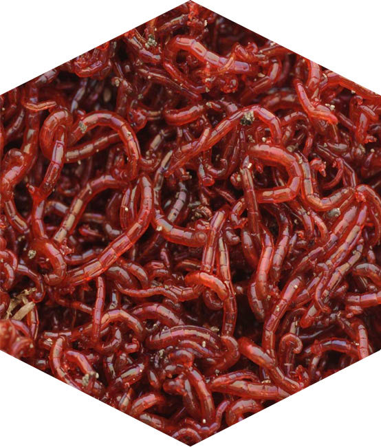 Bloodworm | Natural Particle