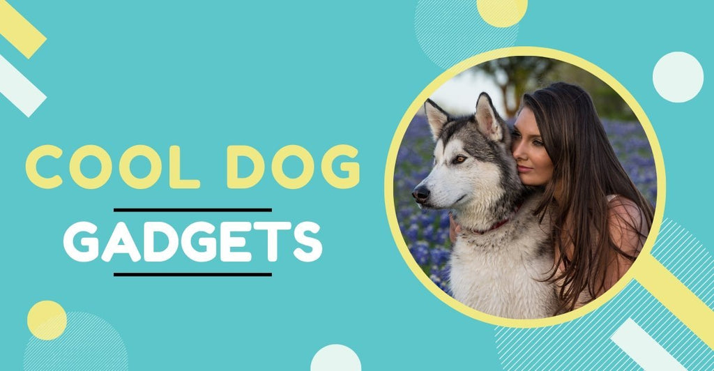 17 Cool Dog Gadgets to Keep Your Dog Clean Healthy and Happy