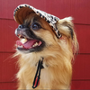 Image of Inspire Uplift dogs Custom Made Machiko Dog Hats... ADORABLE!